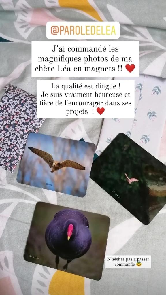 Décoration d'intérieur avec des magnets de mes photos animalières